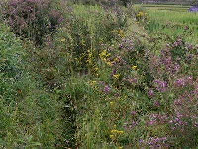 里山の草地