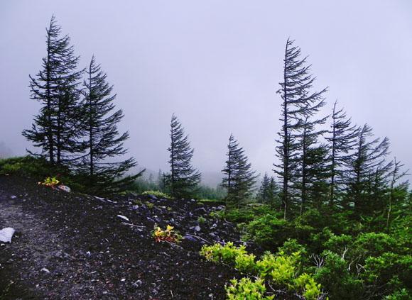 20-11:16樹木