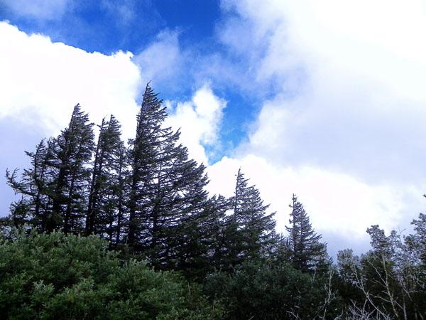 19-10:50樹木