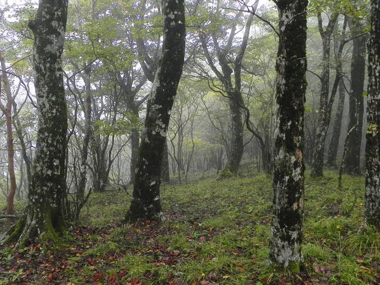 1-雑木林