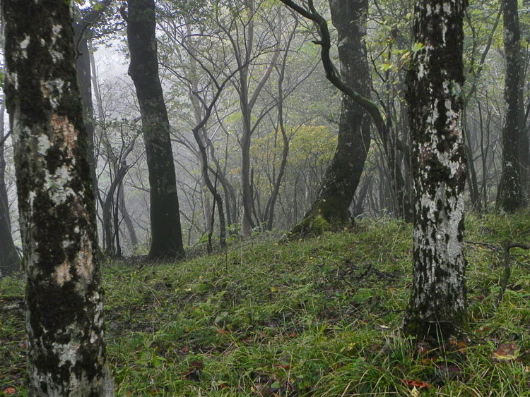 2-雑木林