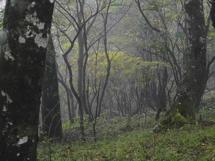 3-雑木林