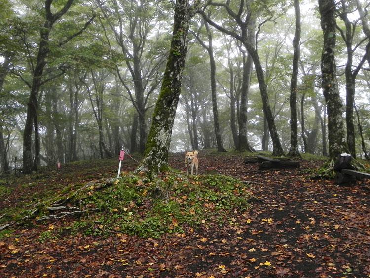 4-雑木林