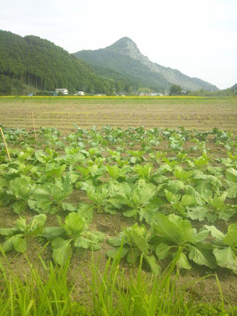 秋冬野菜130913