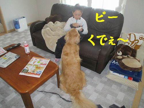 2014-1-29-ハチ-002