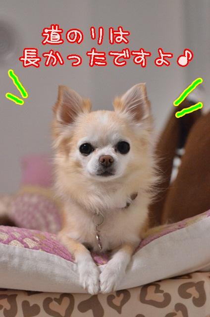 DSC_1165_20140108205820a4b.jpg