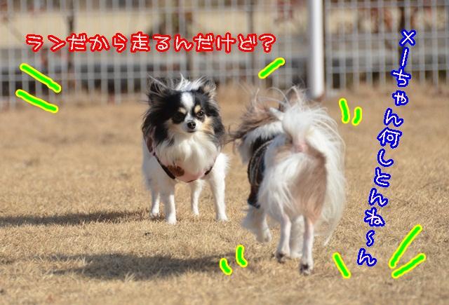 DSC_1455.jpg