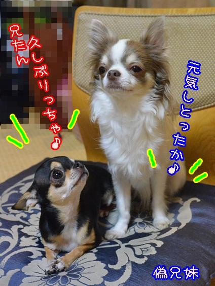 DSC_1625_201401152010109ed.jpg