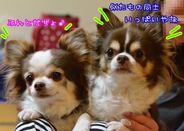 DSC_1645_20140115201038bd9.jpg
