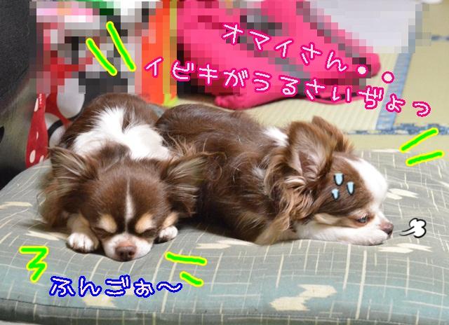 DSC_1943_2014012019293167a.jpg