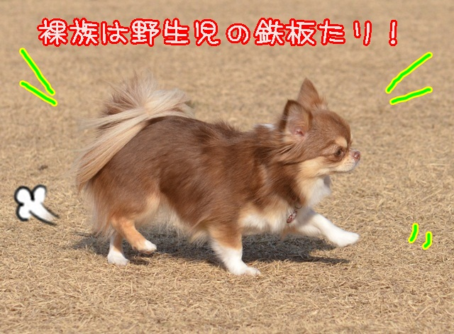DSC_2086_201401242155202ce.jpg