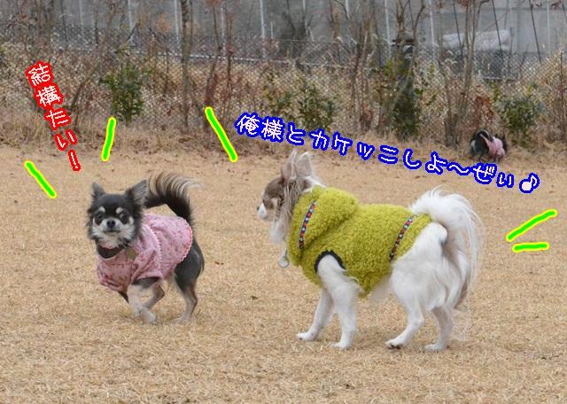 DSC_2279_20140126203229c6f.jpg