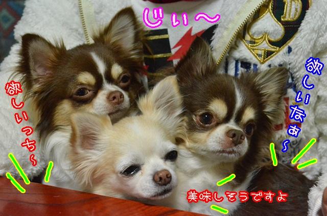 DSC_2398_20140129180951cd8.jpg