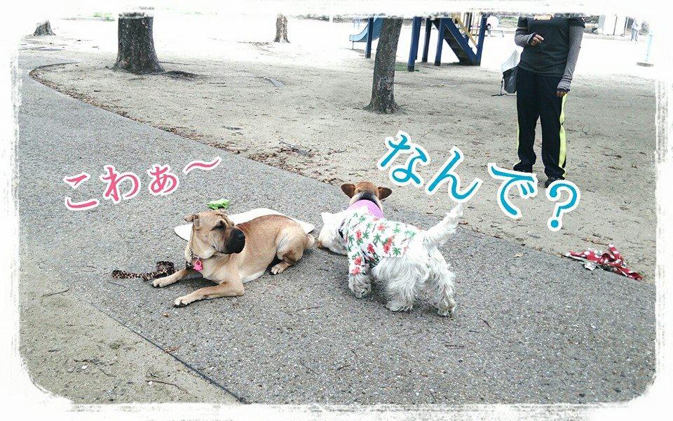 シャーペイ 犬 ブサカワ 犬 (99)