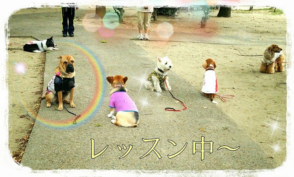 シャーペイ 犬 ブサカワ 犬 シャー・ペイ (89)