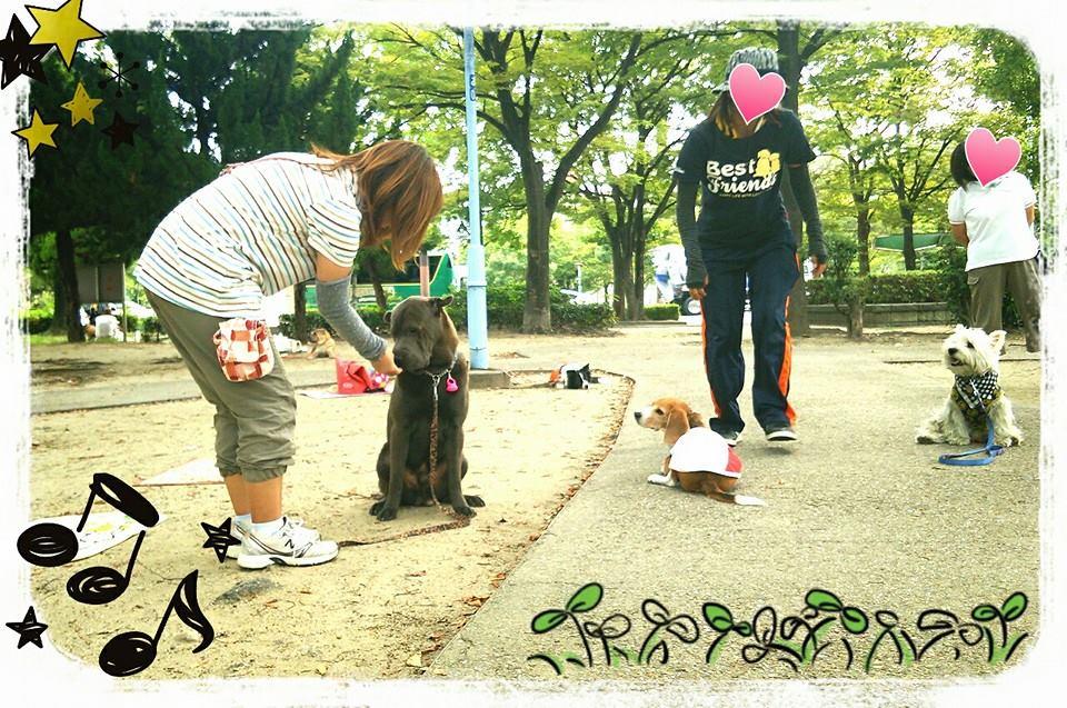 シャーペイ 専門店 シャー・ペイ 犬 ブサカワ 犬  シャーペイ