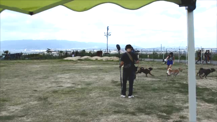 ブスかわ 犬 シャー・ペイ エクスクルーシブ 犬舎 ブサカワ 犬 シャーペイ 子犬