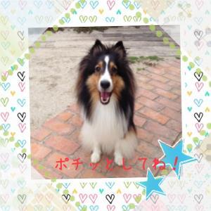 IMG_1622_convert_20130802024449.jpg