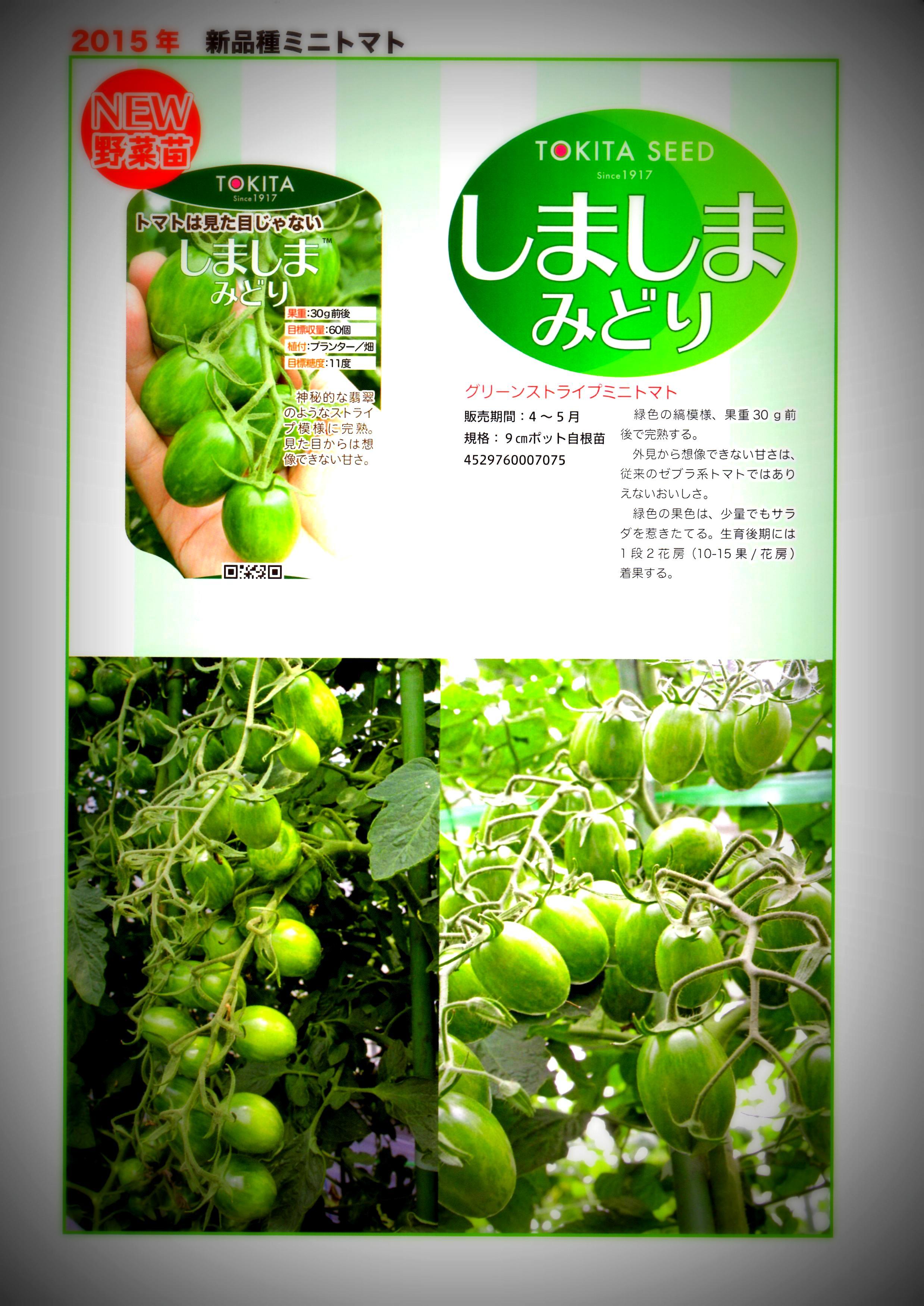 shimashimamidori-panf1.jpg