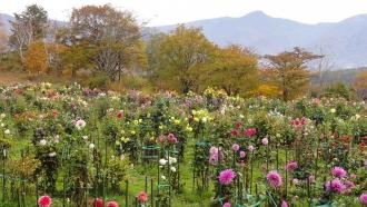 木島平村やまびこ公園141031-1