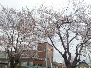niseko yakuba1