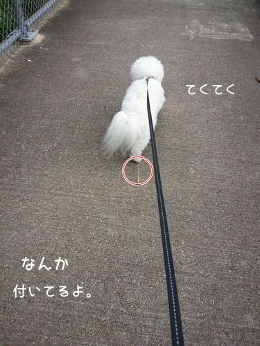20130909_091016.jpg