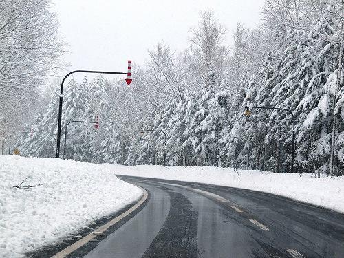 s-重たい雪、、、