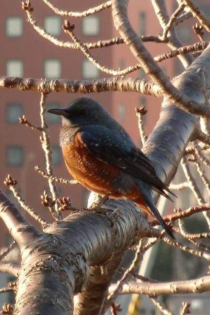 汽車道で見かけた野鳥