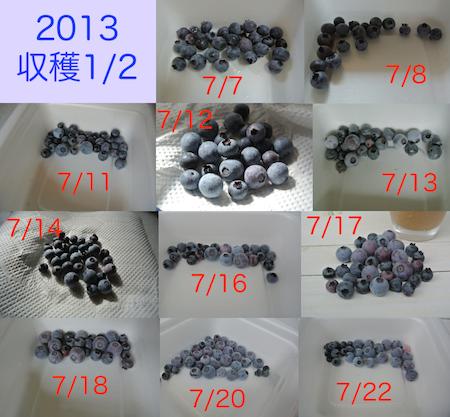 20130723ベリー収穫