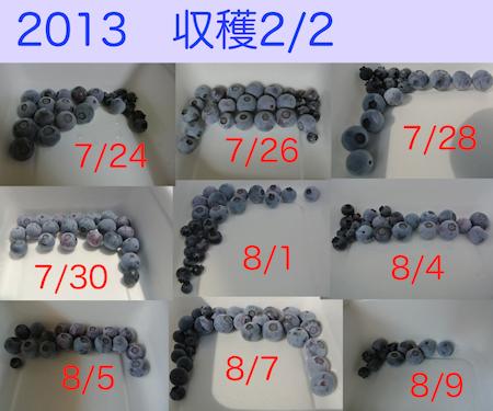 20130809ベリー収穫2:2