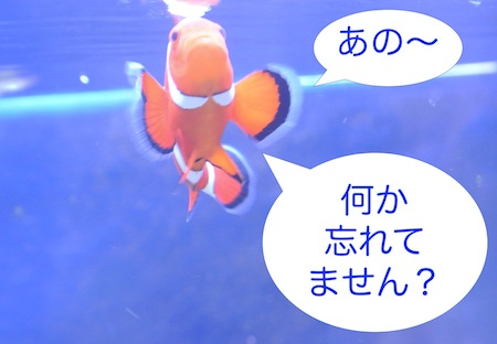 DSC_7987.jpg