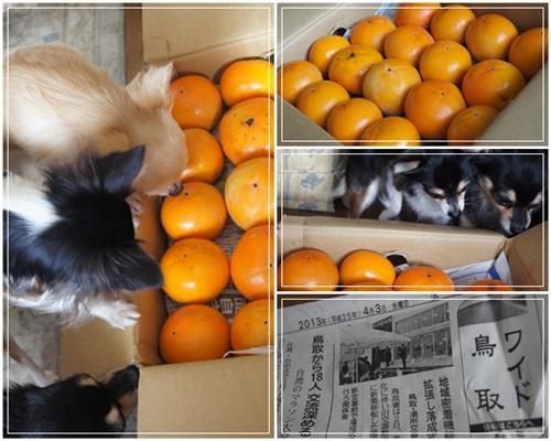 鳥取から柿が届いたよ~♪