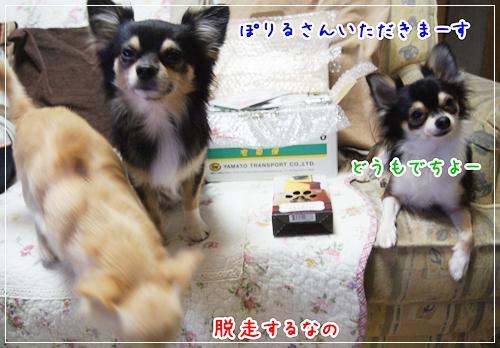 DSC00219.jpg