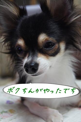 DSC08456-0912.jpg
