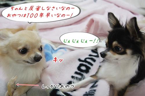 DSC08603-0914.jpg