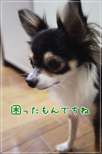 DSC08630-10.jpg