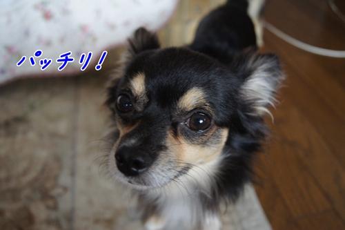 DSC08846-0920.jpg