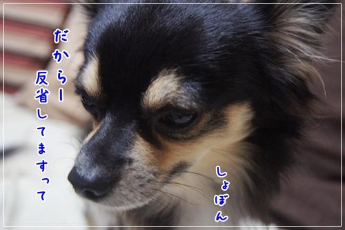 DSC09566-10.jpg