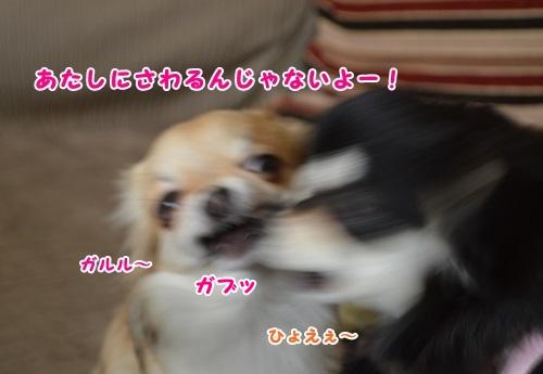 DSC_0271-1.jpg