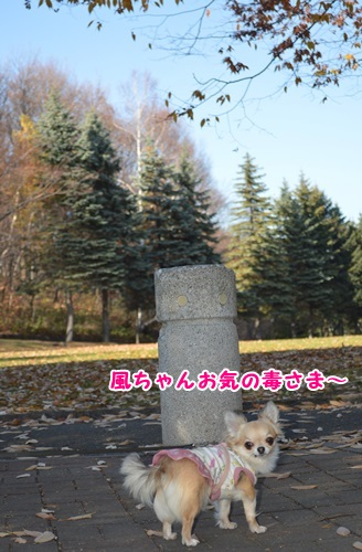 DSC_0369-1.jpg