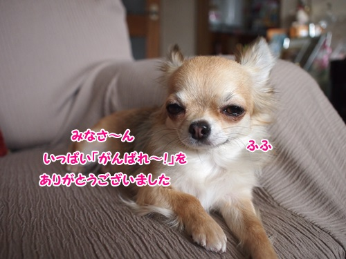 PC020809.jpg