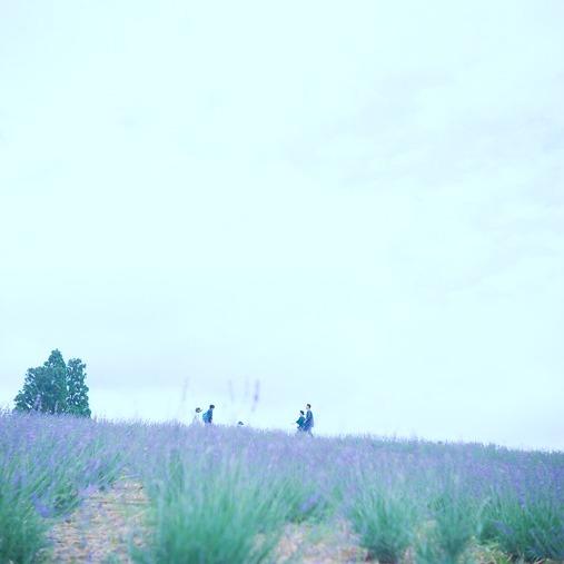 shio_ラベンダー畑