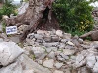 テンチジアマチジ(城内上の御嶽)