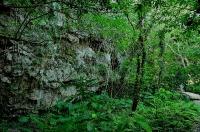 斎場御嶽の森