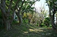 玉城城入り口の林