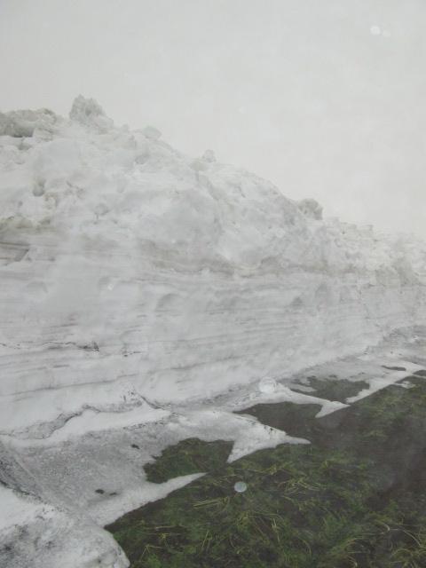 津南雪下人参09