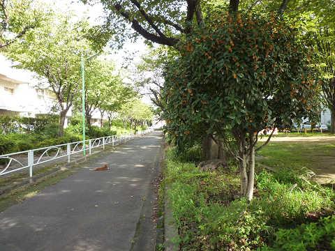 キンモクセイ(金木犀)公園