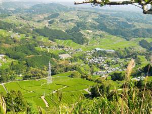 茶畑の絶景