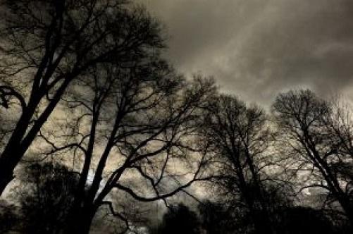 dark-forest-2_2700835.jpg
