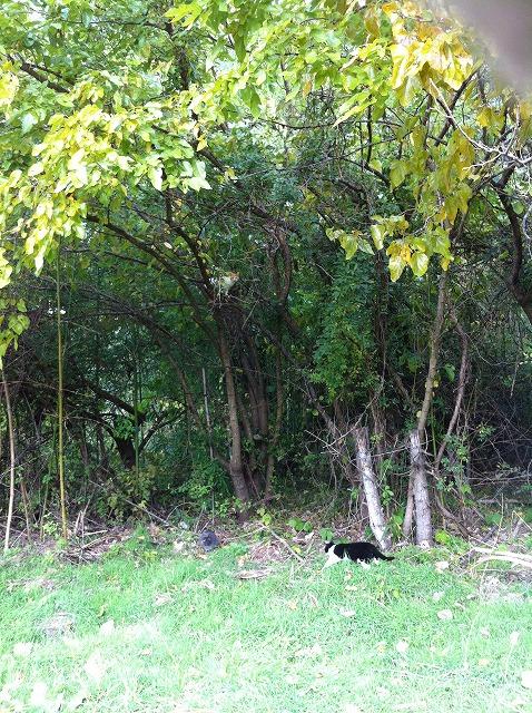 樹の上の猫